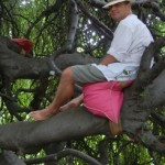David in Tree