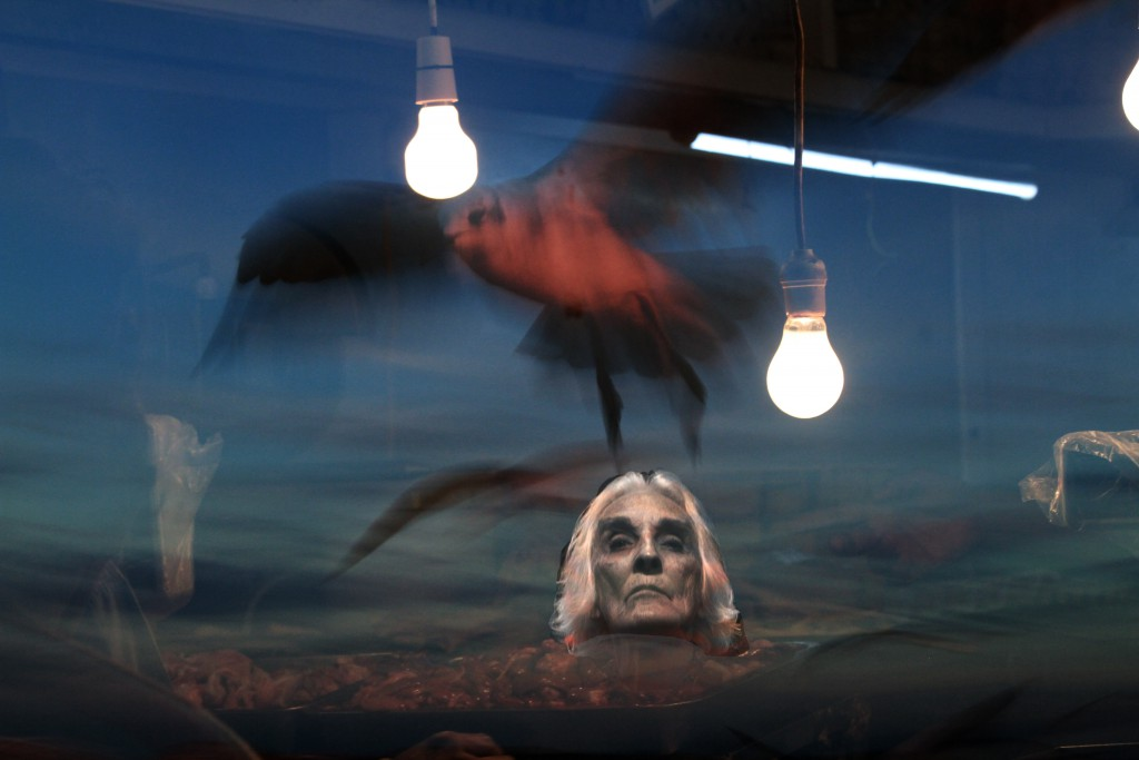 Maida light bulbs birds